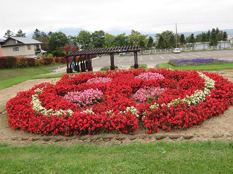町营薰衣草园旅游景点图片