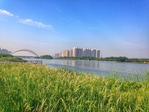 汾河公园的图片