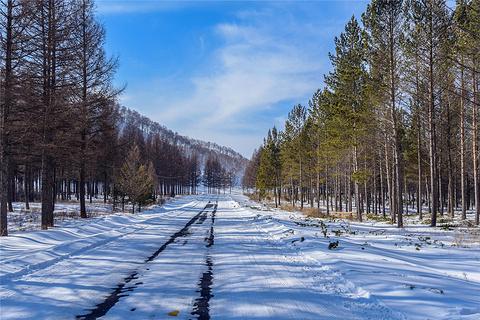 塞罕坝国家森林公园的图片