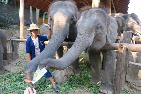 湄沙大象营旅游景点攻略图