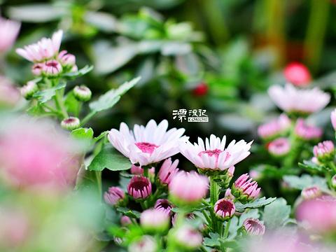 英山四季花海景区旅游景点图片