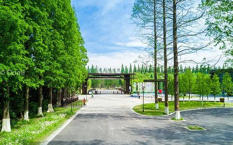 黄海森林公园旅游景点攻略图