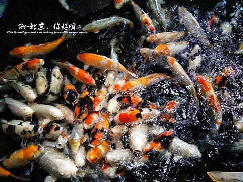 北京海洋馆旅游景点攻略图