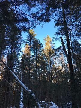 长白山谷底森林旅游景点攻略图