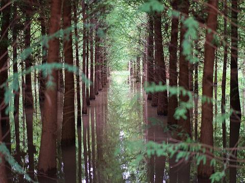 捞鱼河湿地公园旅游景点图片
