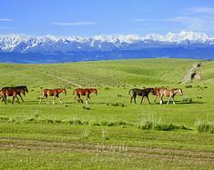新疆摄影专线 --- 天山深处马蹄响,曲悠长,光影千年