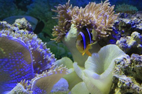欢乐海底世界
