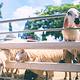 小瑞士绵羊牧场