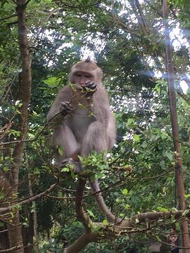 圣猴森林避难所旅游景点攻略图