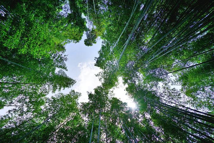 """""""环境好,这里的植被也长得很茂盛,这里更像是日本人的后花园,有很多私人定制的店在这里,_岚山风景区""""的评论图片"""