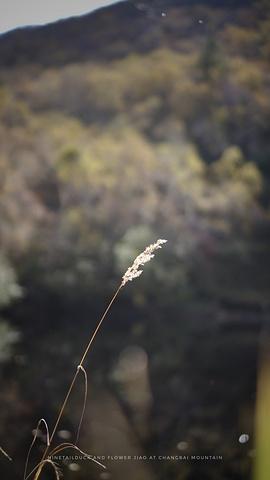"""""""从小天池下来,本来有条小路可以走去绿渊潭,听说人少,景色也十分美_小天池""""的评论图片"""