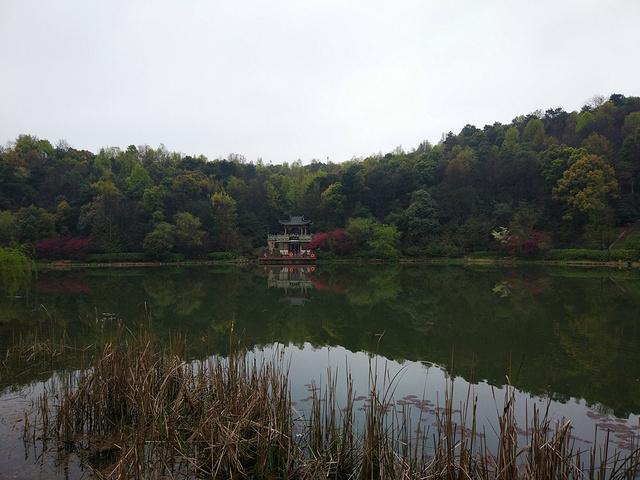 """""""从桃子湖下,顺便看看美丽桃子湖,荷花开满整个湖面。当然岳麓书院不免门票,门票50。【美食及自驾】_湖南大学""""的评论图片"""