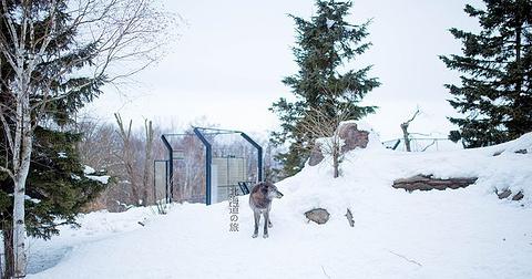旭山动物园旅游景点攻略图