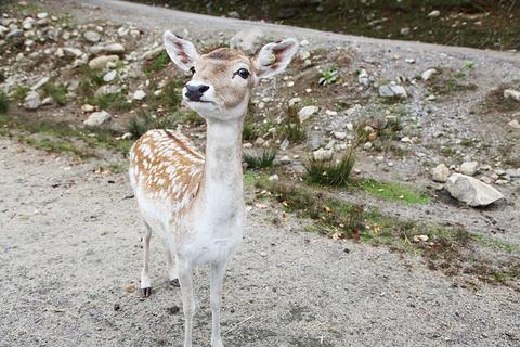 Parc omega野生动物园旅游景点攻略图