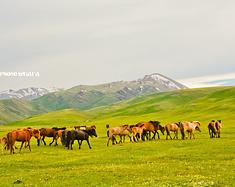 兔子&小羊——我想成为草原上的一匹马,悠然自得(北疆、伊利自驾)