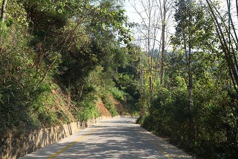 西双版纳原始森林公园旅游景点攻略图
