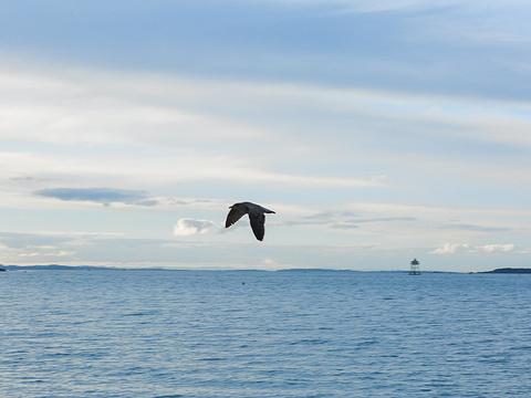 使命湾旅游景点图片