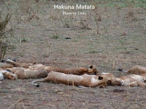 马赛马拉国家保护区旅游景点图片