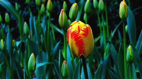 花卉园的图片