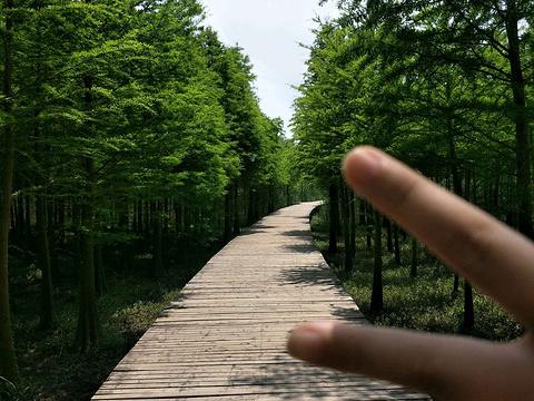 西沙湿地公园旅游景点图片