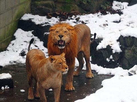 杭州野生动物世界旅游景点图片