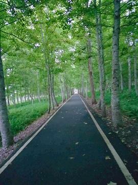 大农大富平地森林公园旅游景点攻略图