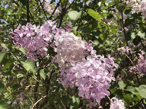 海棠花溪旅游景点图片