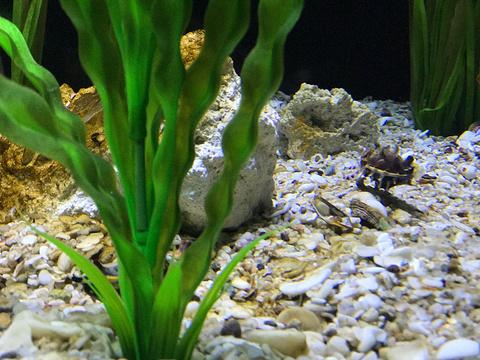 瑞普利水族馆旅游景点图片