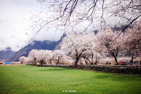 波密桃花沟的图片