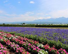 【再探东瀛】七月,看一场绽放在北海道盛夏的花火