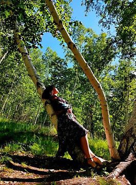 白桦林景区旅游景点攻略图