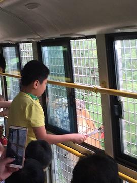 东北虎林园旅游景点攻略图
