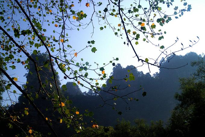 金鞭溪、百龙天梯、袁家界、杨家界图片