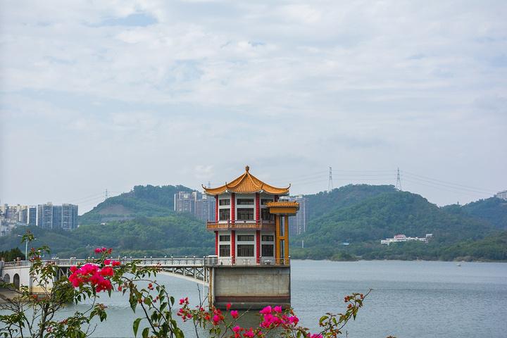 """深圳东湖公园在_2020在二十世纪八十年代就成为有名的深圳市""""五湖四海""""风景"""