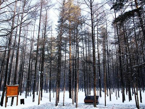 松苑原始森林公园旅游景点图片
