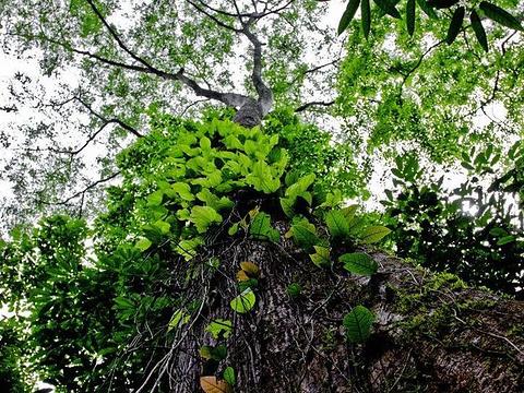 漏斗森林旅游景点图片