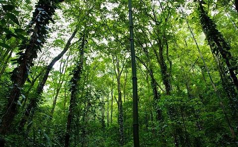 漏斗森林旅游景点攻略图