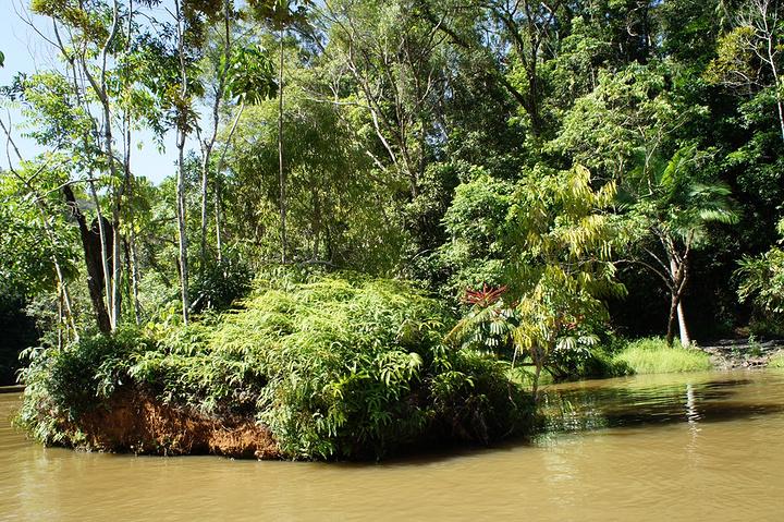 """""""一定要去库兰达热带雨林游玩_库兰达""""的评论图片"""