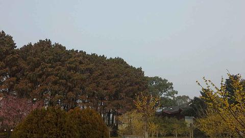 东湖梅园旅游景点攻略图