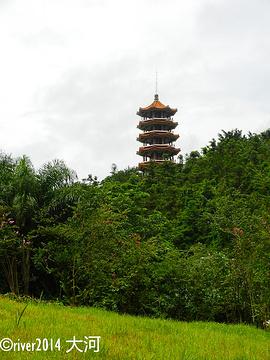 仙湖植物园旅游景点攻略图