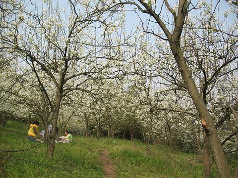梨花溪旅游景点图片
