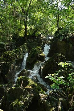 水上石林旅游景点攻略图