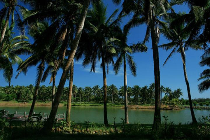 """""""海南 椰林""""的图片搜索结果"""