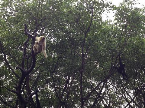 长隆野生动物世界旅游景点攻略图