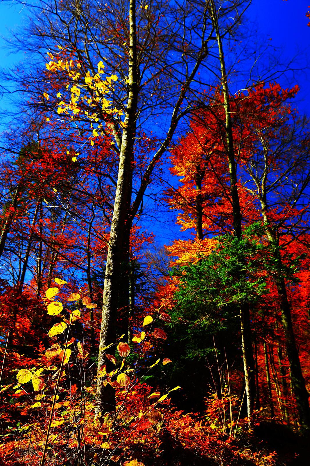 秋天,在欧洲谱写童话