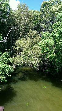 水中森林旅游景点攻略图