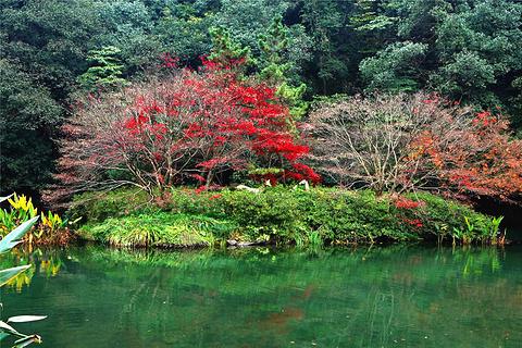 九溪烟树的图片