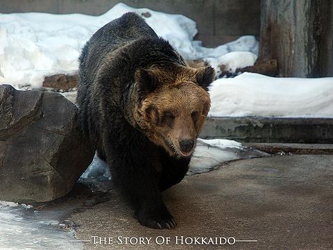 旭山动物园旅游景点图片