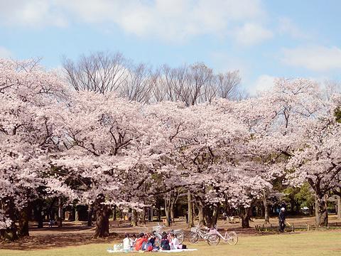 代代木公园旅游景点图片