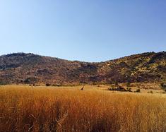 《彩虹南非》